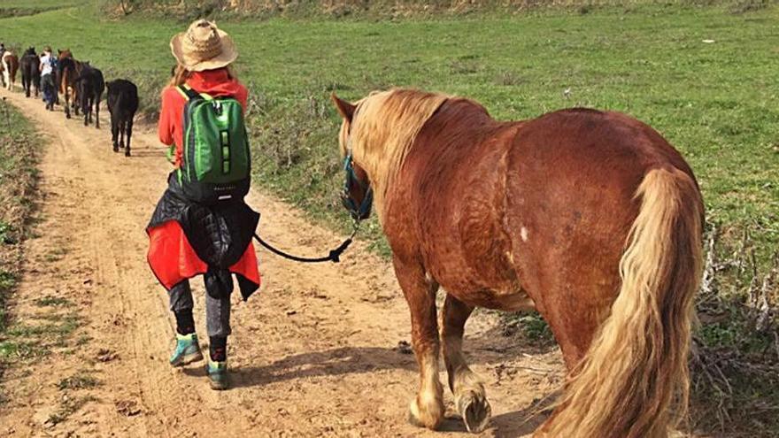 Nou espai de pastura per als cavalls de  la transhumants