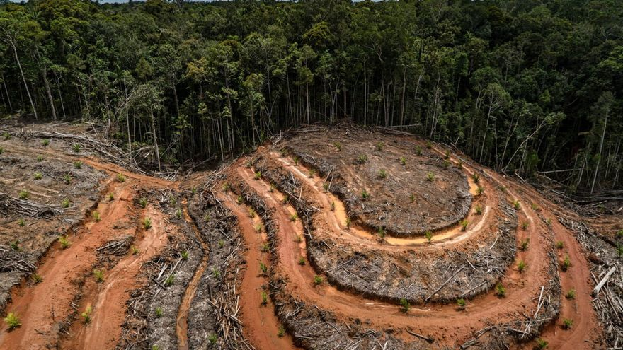 «La humanidad corre peligro por el declive de la biodiversidad», clama la ONU
