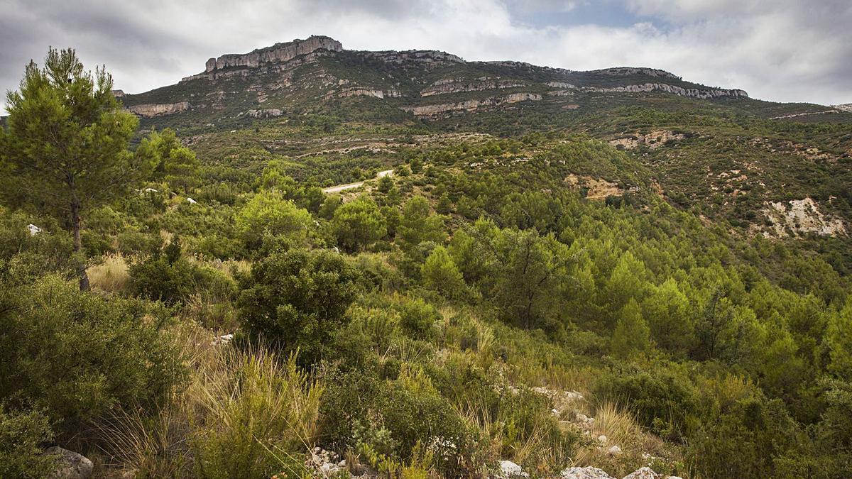 La repetición de veranos largos y otoños secos afectará a la regeneración vegetal