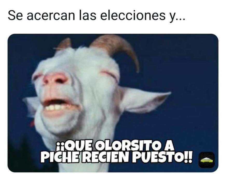 Memes y virales de 2019 en Canarias