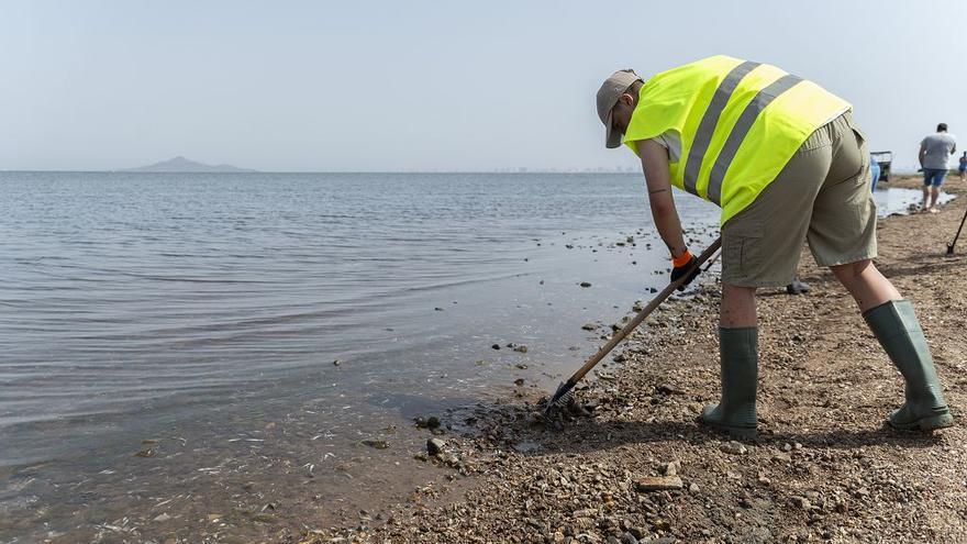 Abren todas las playas del Mar Menor afectadas por la anoxia