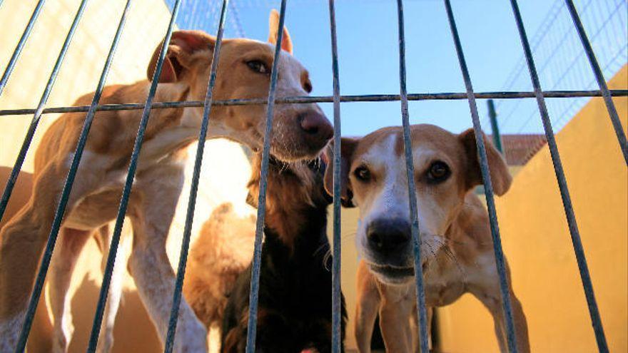 60 ayuntamientos canarios cumplen con la Ley de Protección Animal