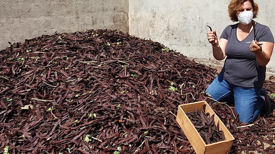 Agricultura exige un certificado para evitar robos en la campaña de algarrobas