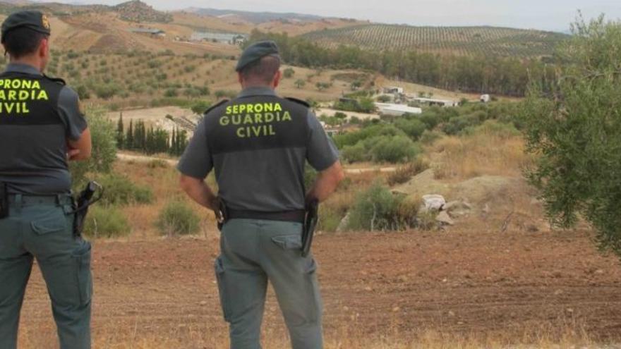 El Seprona investiga a un jubilado por la muerte de 20 gatos en La Palma