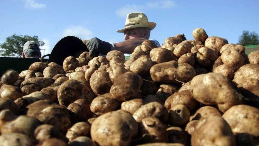 Bruselas auditará los controles de la Xunta para erradicar la plaga de la patata
