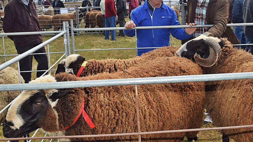 Carbajales suspende la feria y el concurso nacional de la raza ovina castellana