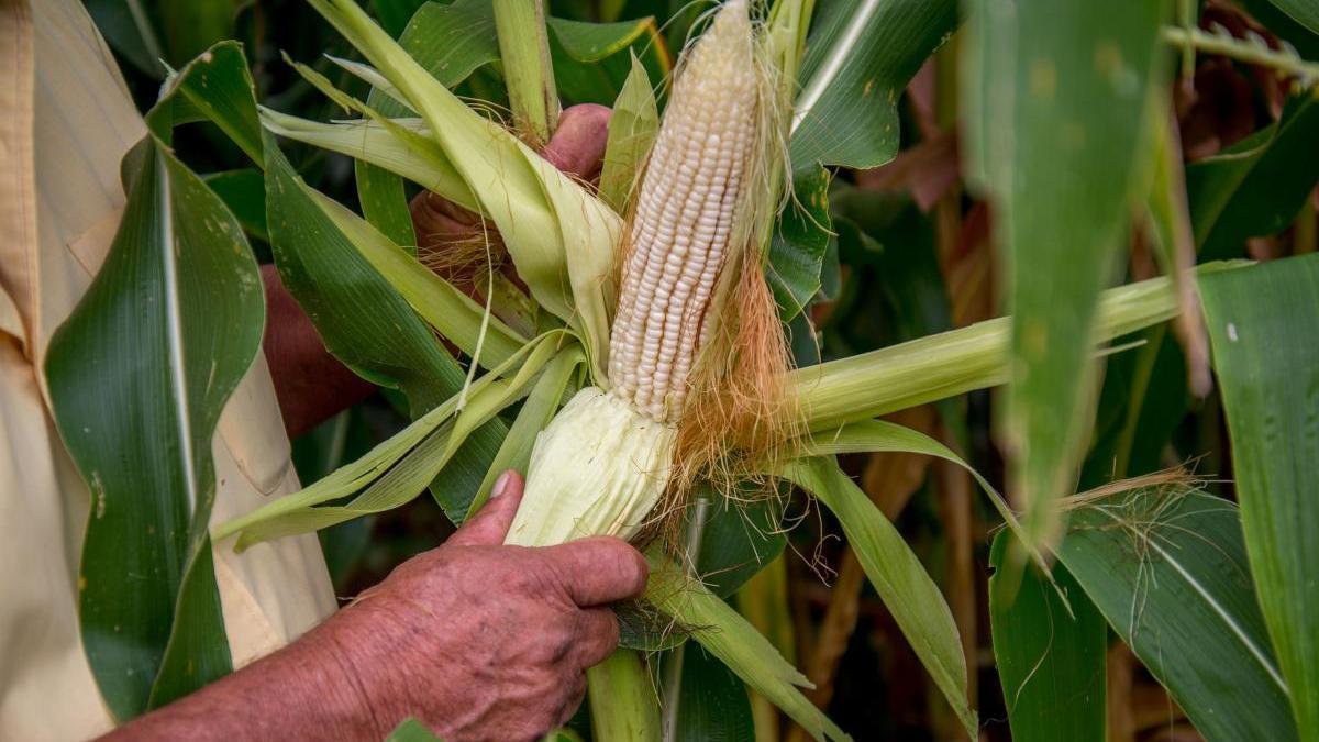 Agricultura en México