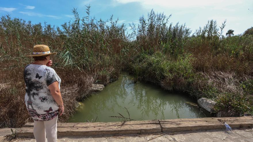 Las cañas taponan cauces y barrancos aumentando el riesgo de inundación ante una DANA