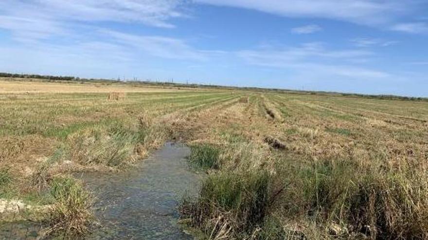Catarroja impulsará nuevas medidas para la recogida de la paja de arroz en 2020