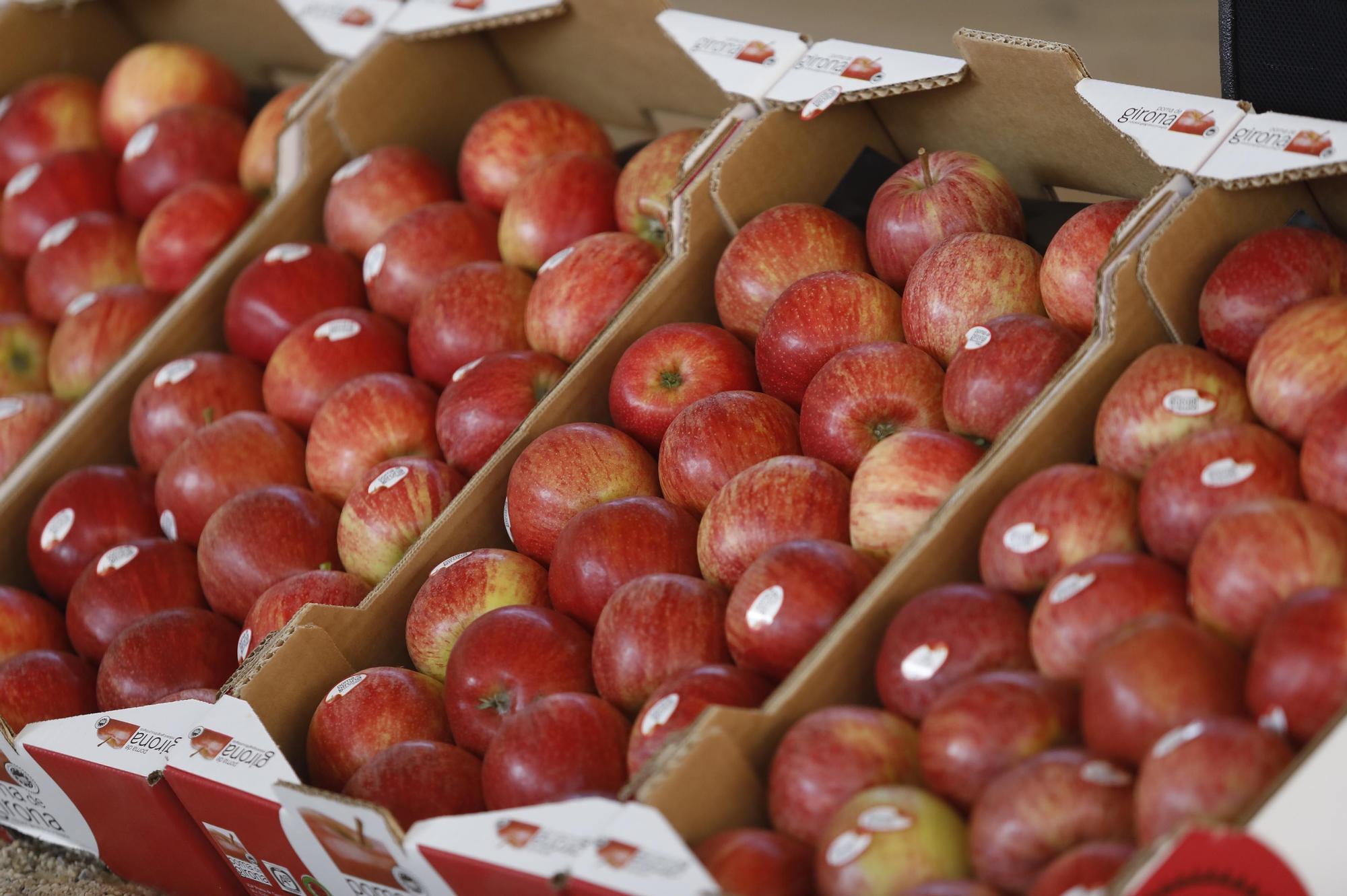 Bàsquet i pomes de Girona planten cara als poderosos