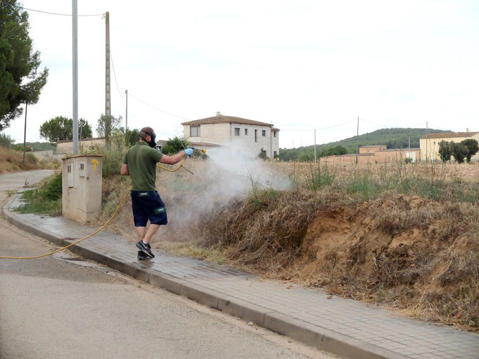Bàscara fumiga un camp de colze per acabar amb una plaga de xinxes