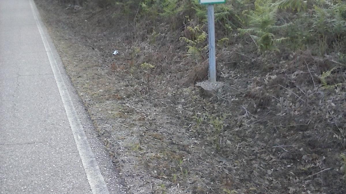 Zona en la que Ecologistas en Acción denuncia el uso de herbicidas tóxicos.
