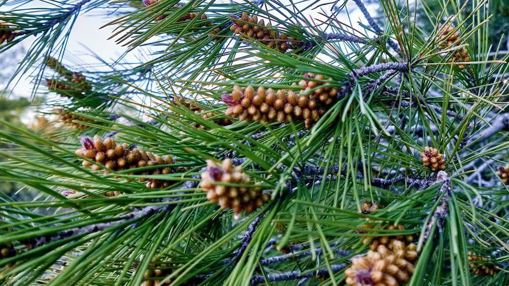 Naixement. Ja fa dies que som a la primavera, l'estació de l'any que més agrada a la naturalesa, ja que molts arbres comencen a vestir-se i a d'altres els comencen a néixer els fruits.
