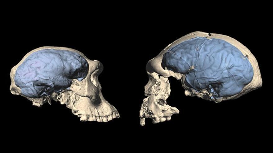 El cerebro humano moderno se originó en África hace más de 1,5 millones de años