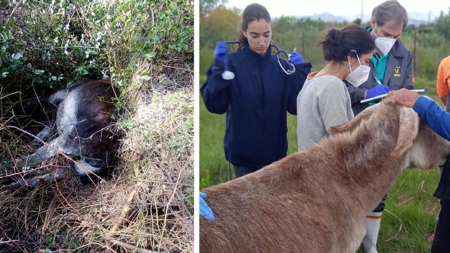Estrés por acoso, probable causa de la muerte de los burros del Desert