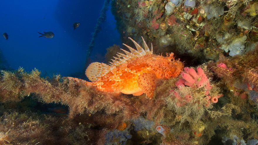 Submarinismo en Ibiza: descubrir la isla desde las profundidades
