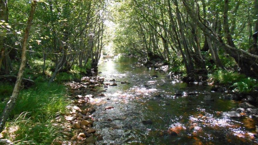 La CHD organiza en Puebla de Sanabria una jornada didáctica en torno al río Negro