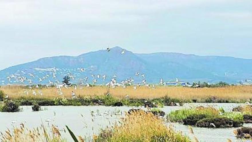 Nueva ruta de la sociedad de ornitología de Burjassot