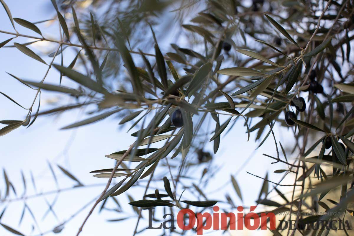 FuentesdelMarqués_Floración003.jpg