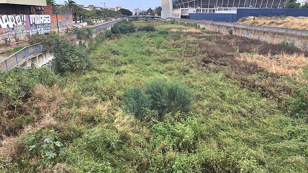 El Guadalmedina precisa de muchas cosas, pero la primordial es que se limpie, adecente y no convierta en el nido de ratas, mosquitos y bichas