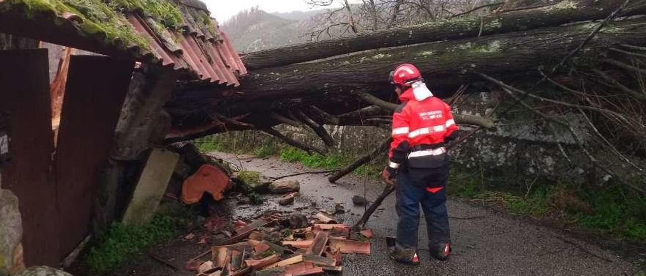 Un bombero del GES Val Miñor se dispone a retirar un árbol caído sobre un muro y un vial en Nigrán. // GES Val Miñor