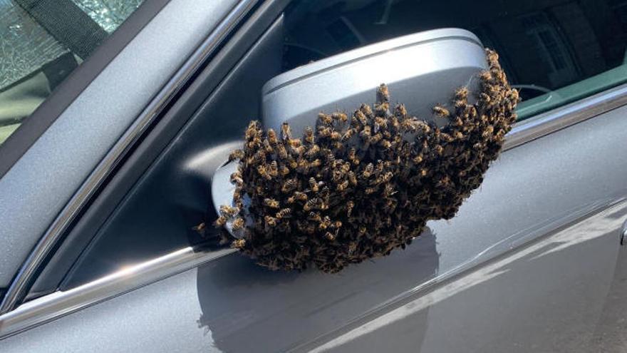Un enjambre de abejas elige el retrovisor de un coche como 'hogar' en Tenerife