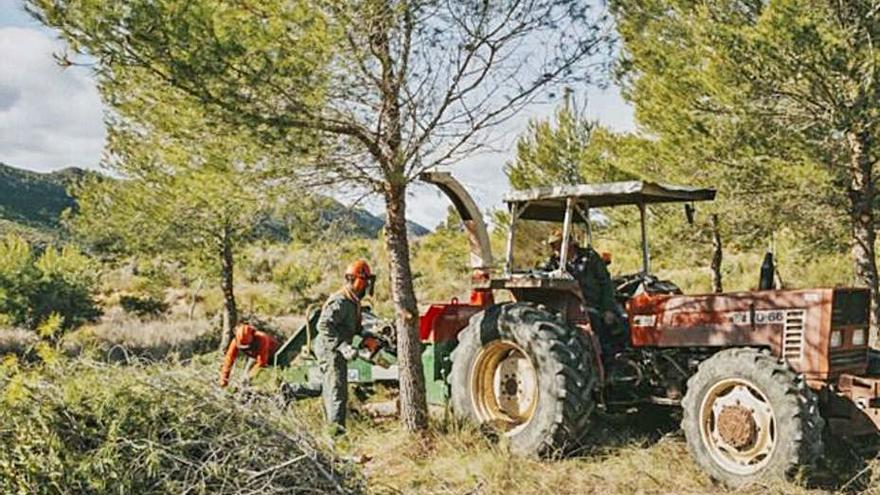 Realizan labores de regeración de masas forestales en Calasparra y Cieza