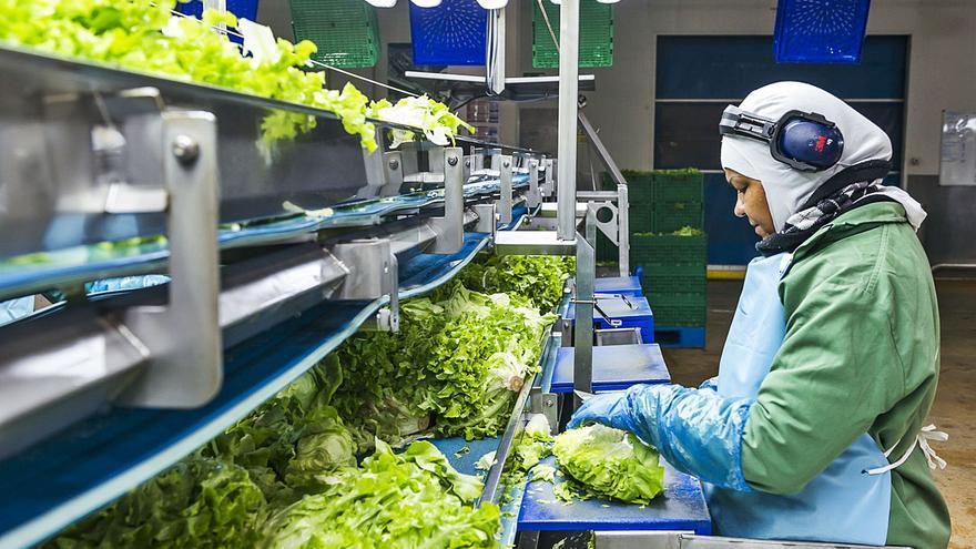 La industria alimentaria valenciana crece un 53 % en empleo eventual durante la crisis