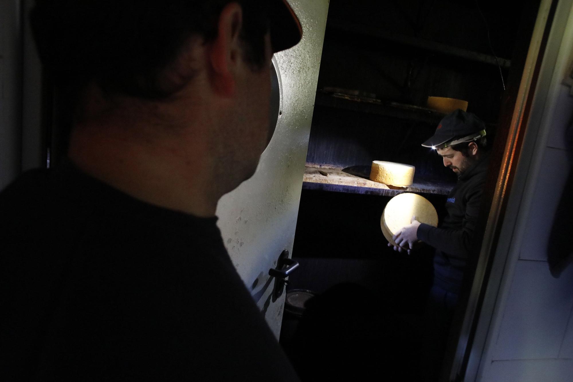 Así se elabora el gamonéu del Puertu: de la cueva a la mesa.