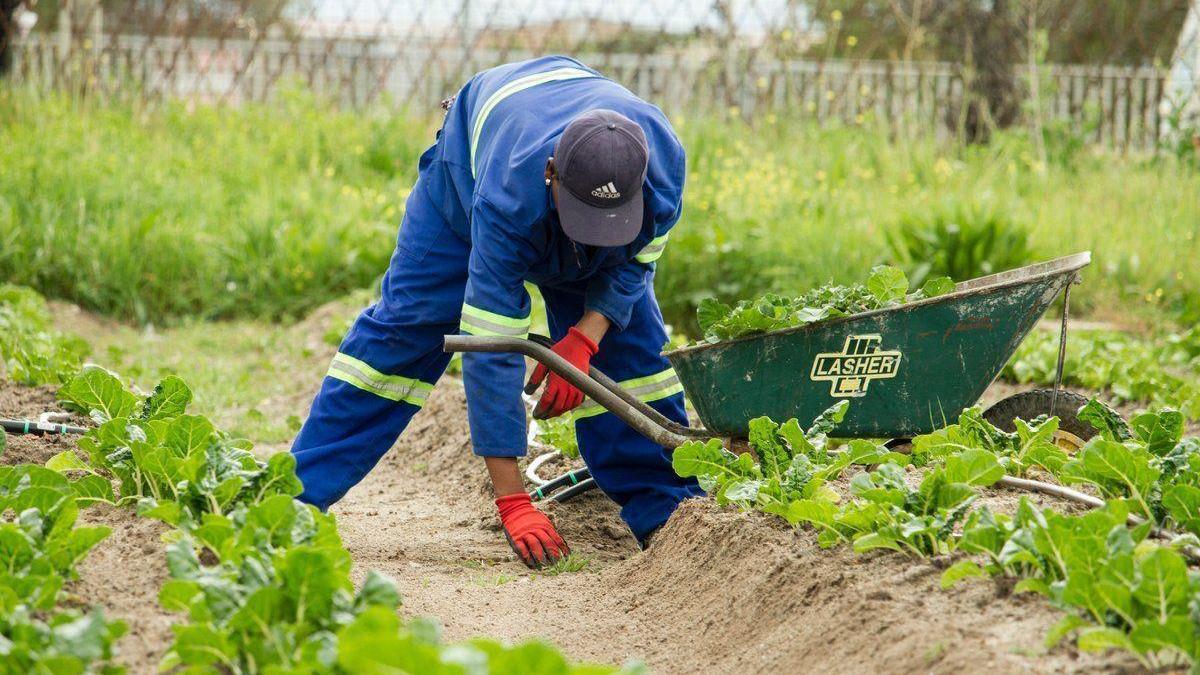 Los agricultores podrán vender de forma directa al consumidor