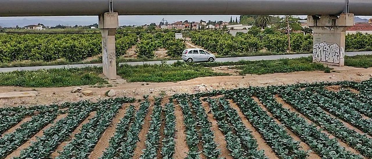 Asaja sostiene que los recortes previstos en el trasvase amenazan 140.000 ha de cultivos.    TONY SEVILLA