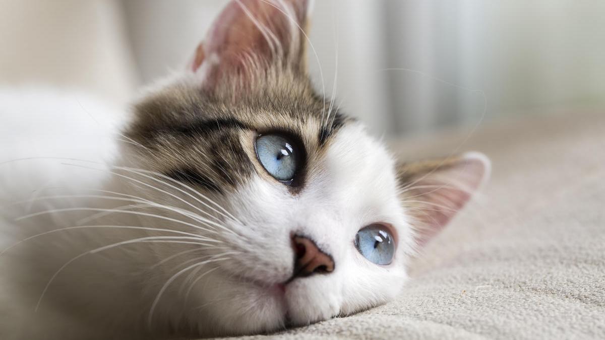 Existen cinco tipos de dueños de gatos.