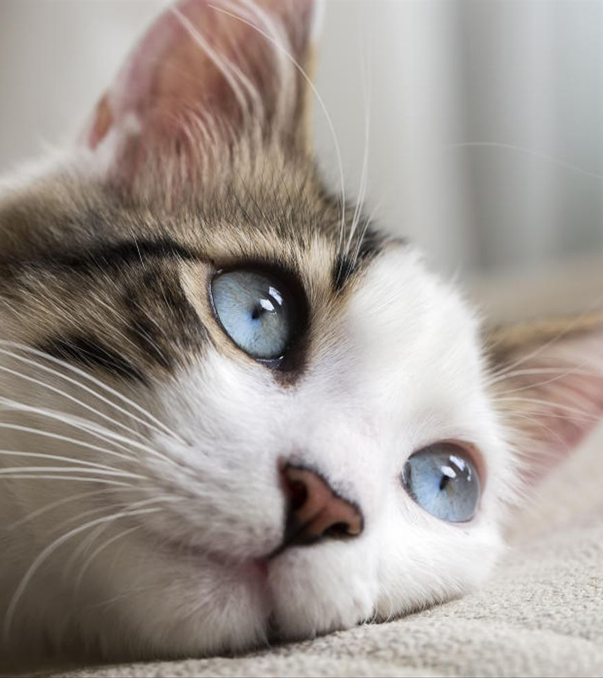 Cinco tipos de dueños según la naturaleza cazadora de sus gatos