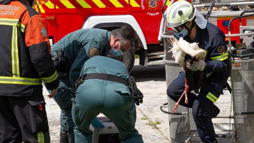 Guardia Civil y bomberos recuperan una cigüeña herida atrapada en una veleta en Tardobispo