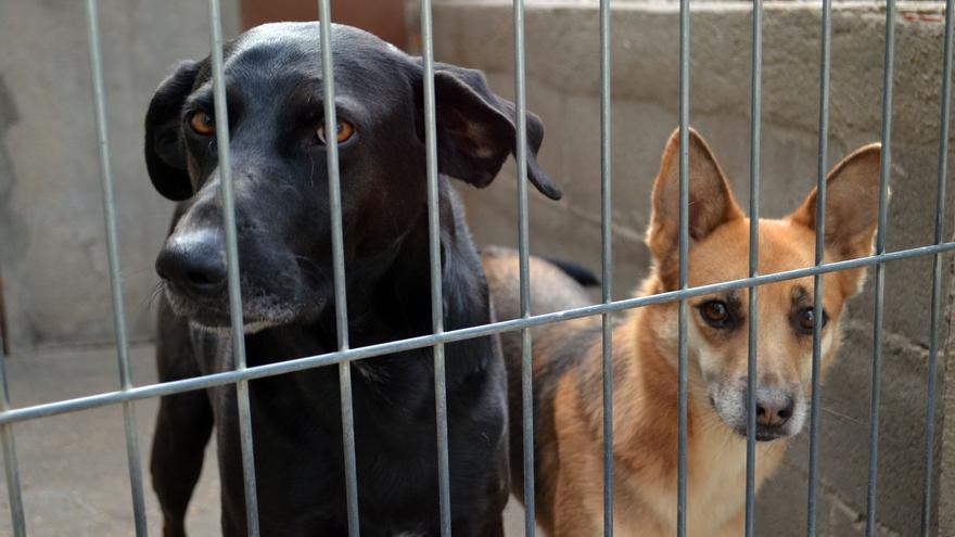 Diez perros recogidos en la perrera de Benavente y cinco adoptados en el último mes