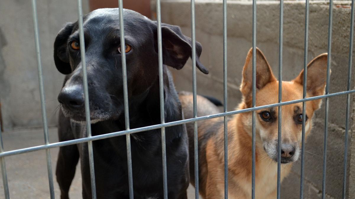 Perros de la perrera municipal de Benavente. / E. P.