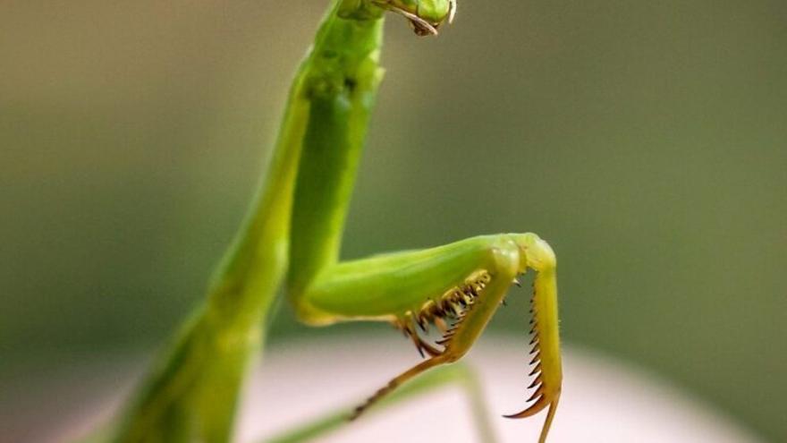 La química repelente de los insectos suena a música de terror