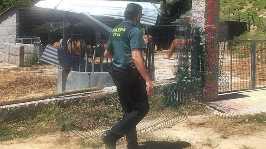 Atentado en casa de las vacas cachenas