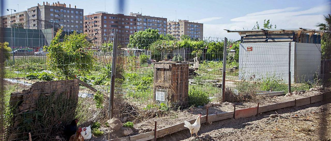 Terrenos con huertos urbanos y gallinas en el PAI de Benimaclet.   GERMAN CABALLERO