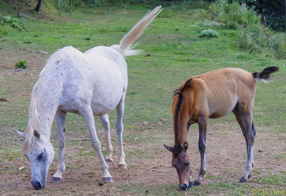 Bonics cavalls a la vall.