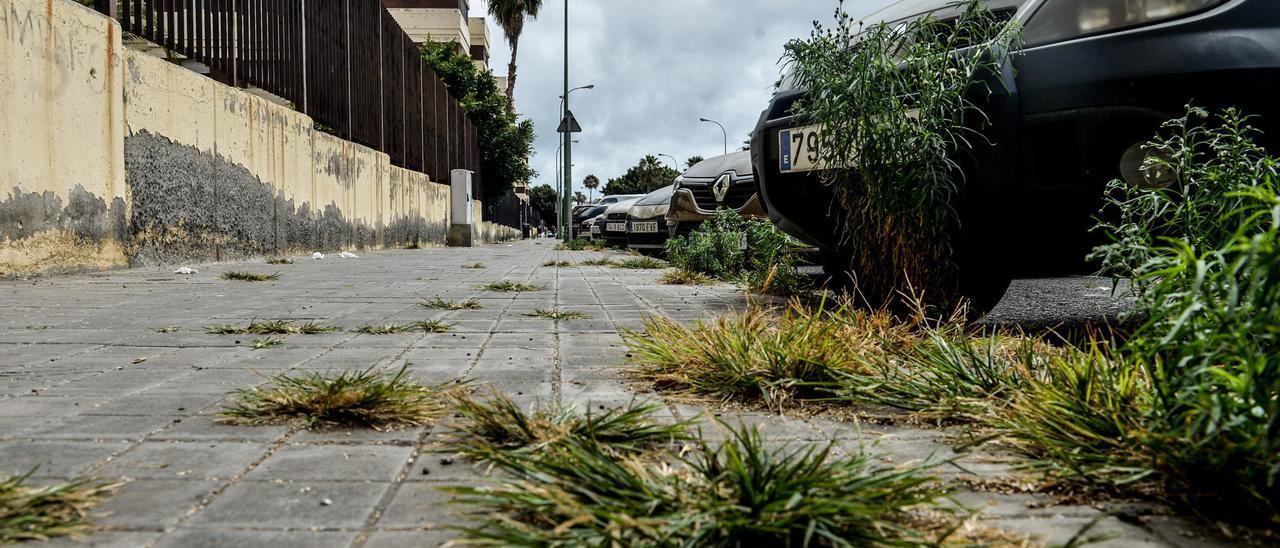 Las malas hierbas crecen en las aceras de La Paterna.