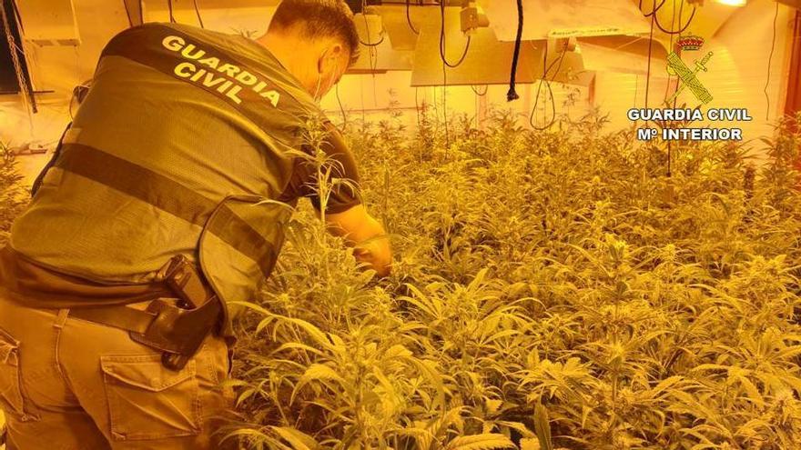 La Guardia Civil detiene a 12 traficantes que cultivaban marihuana en chalés ocupados en la Vega Baja
