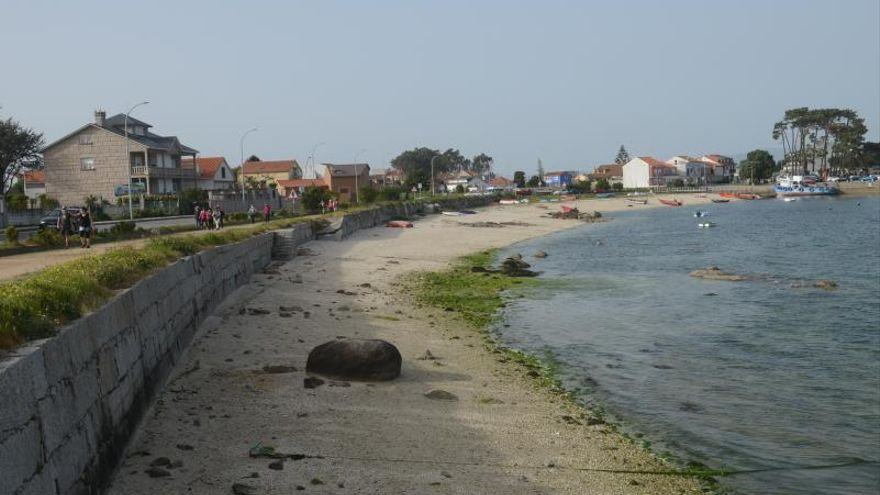 A Illa y Vilanova sufren para deshacerse de las algas cuando inundan los bancos marisqueros
