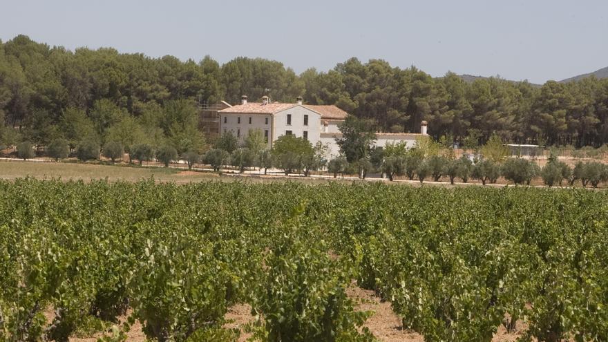 DO Valencia, vinos de calidad con marcado carácter mediterráneo