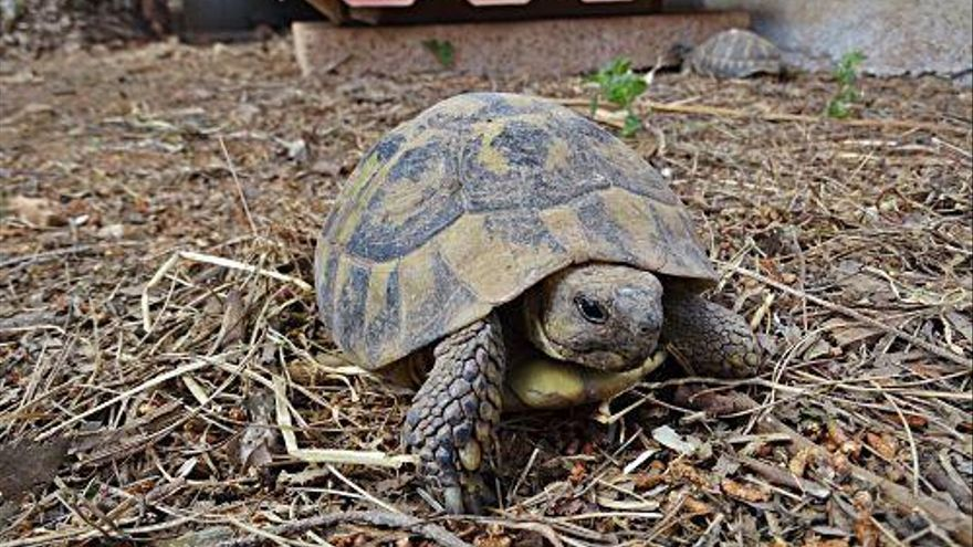 Weltschildkrötentag: Wie es den Tieren auf Mallorca geht