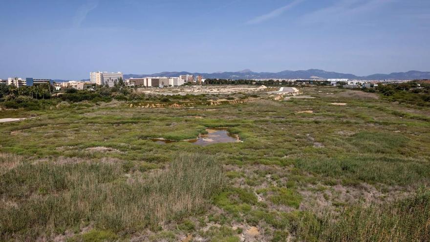 Terraferida exige a Cort que 'congele' nuevas urbanizaciones en Palma