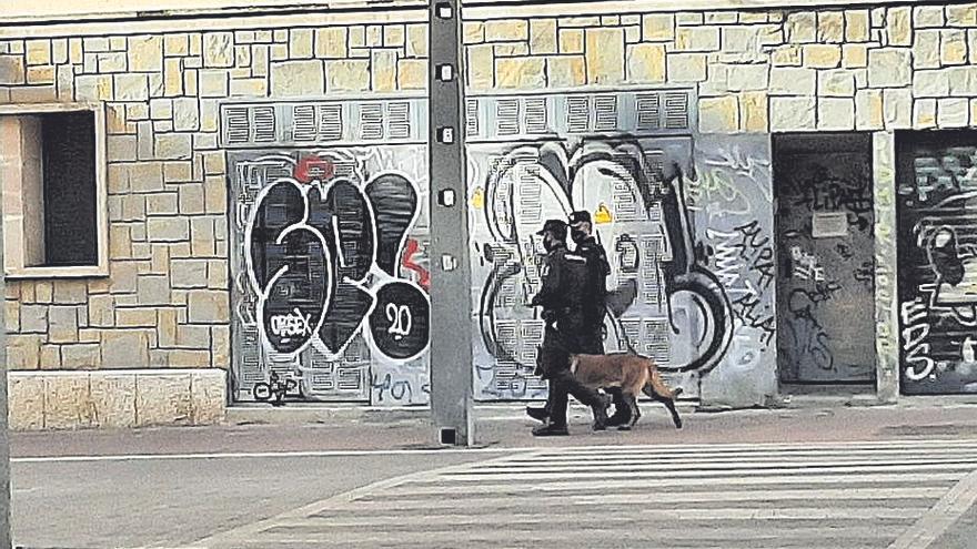 Perros policía de paseo por Palma para «socializar»