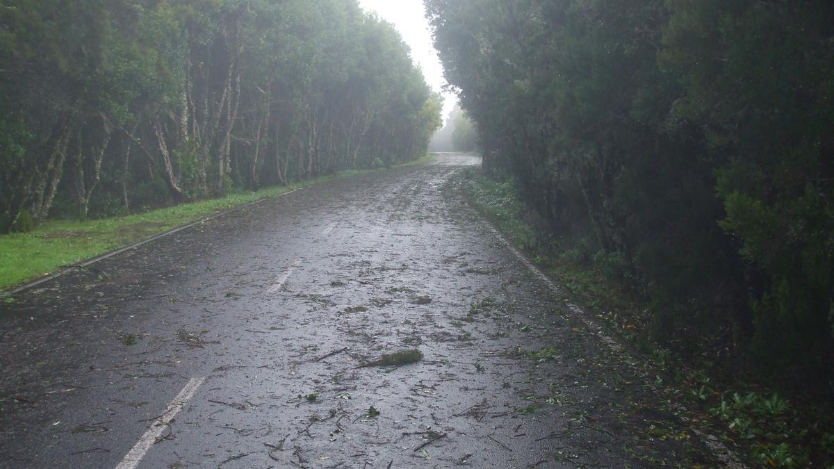 Efectos de un temporal de viento en la isla de La Gomera