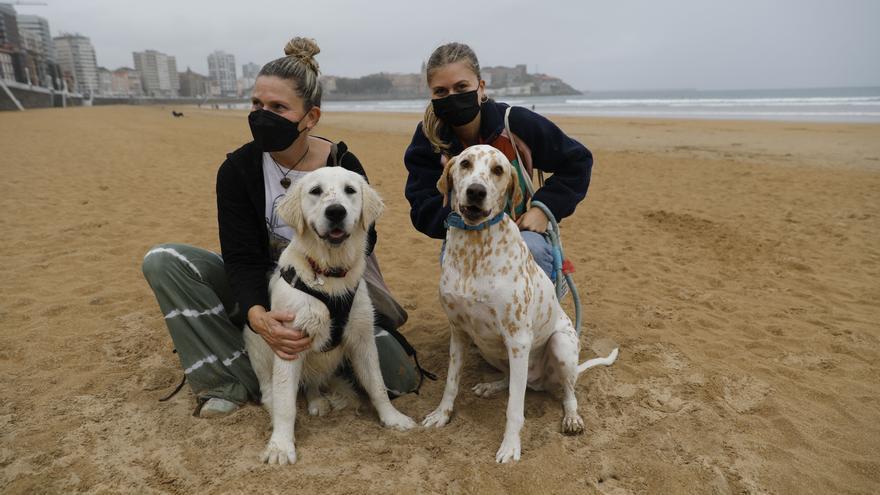 Los perros reconquistan la arena