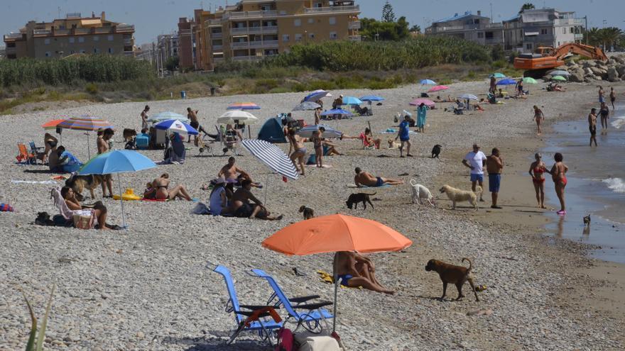 Estas son las seis playas que permiten perros en la provincia de Castellón